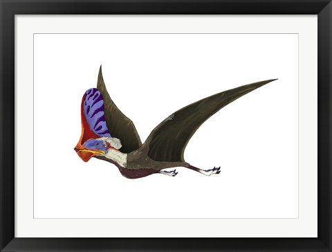 Framed Tapejara, a Genus of Brazilian Pterosaur from the Cretaceous Period Print