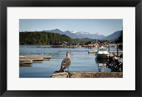 Framed British Columbia, Vancouver Island, Strathcona Park, Harbor Print