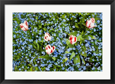 Framed Flowers, Horseshoe Bay, British Columbia Print