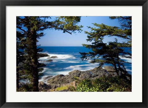 Framed Wild Pacific Trail, Vancouver Island British Columbia Print