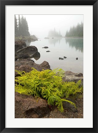 Framed Alpine lady fern, Garibaldi Lake, British Columbia Print