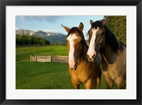 Framed Horses in pasture, British Columbia Print