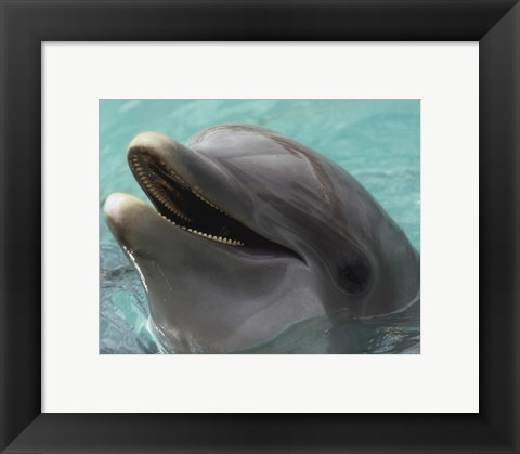 Framed Dolphin - up close Print