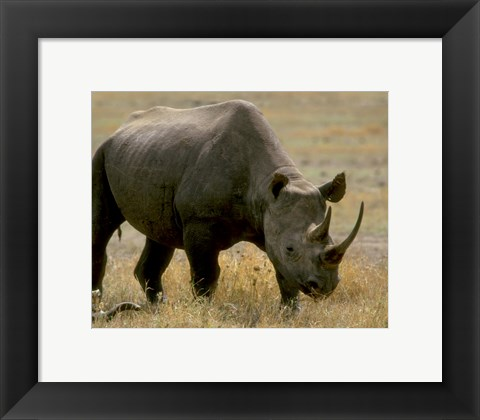 Framed Rhinoceros Print