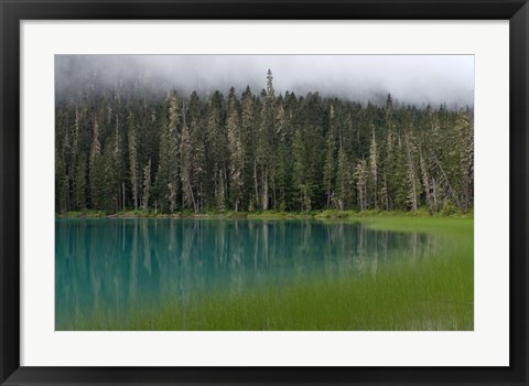 Framed Blue glacial lake, evergreen forest, British Columbia Print