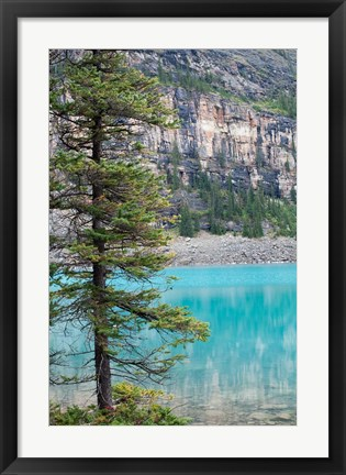 Framed Pine tree, Moraine Lake, Banff National Park, Canada Print