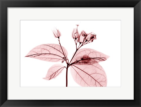 Framed Cab Bleeding Heart Print