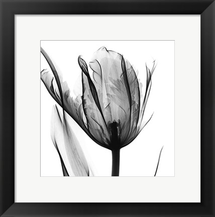 Framed High Contrast Tulip Print