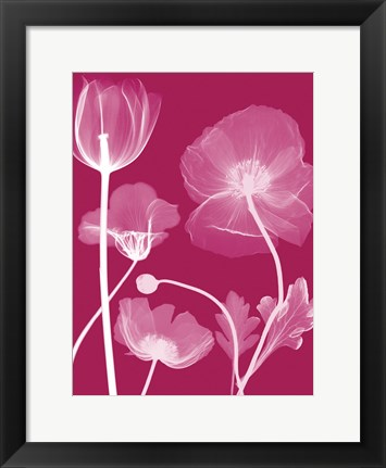 Framed Transparent Flora 13 Print
