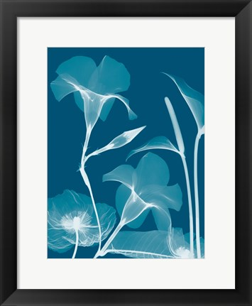 Framed Transparent Flora 14 Print