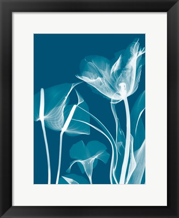 Framed Transparent Flora 11 Print