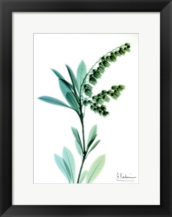 Framed Lily of The Valley 1 Print