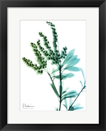 Framed Lily of The Valley 2 Print