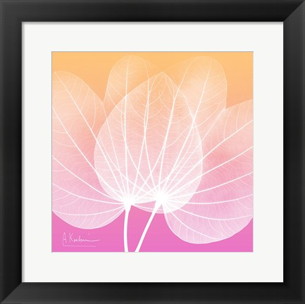 Framed Orchid Tree Pink 1 Print