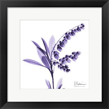 Framed Lily of The Valley 3 Print