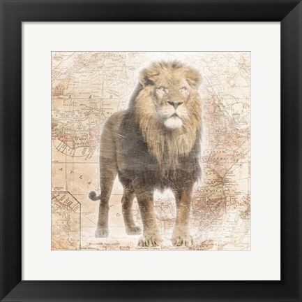 Framed African  Animals - Lion Print