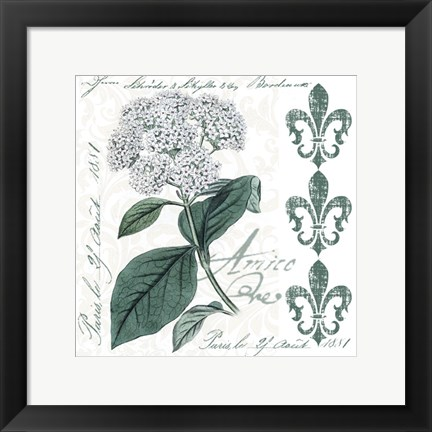 Framed Botanical Flowers Print