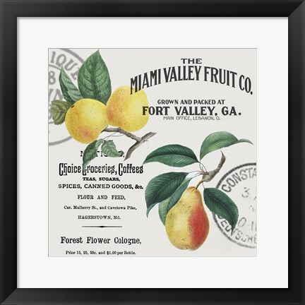 Framed Vintage Fruit Print