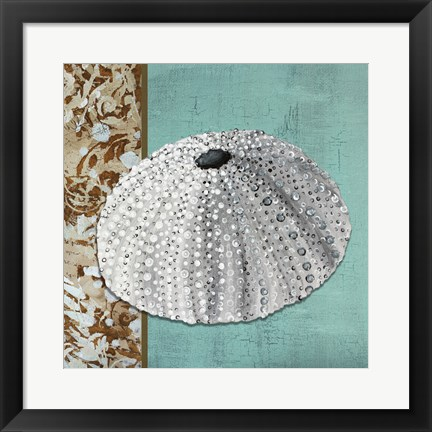 Framed Silver Sea Urchin - Tan Side Border Teal Crackle Back Print