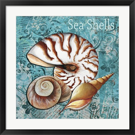 Framed Sea Shells Print