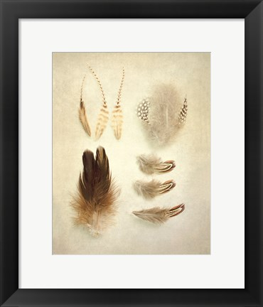 Framed Feathers II Print