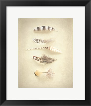Framed Feathers III Print