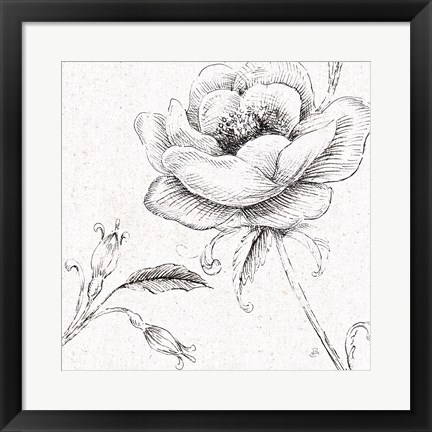 Framed Blossom Sketches II Print