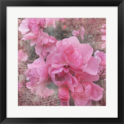 Framed Fresh Rose I Print