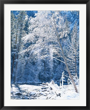 Framed Snow covered trees along Merced River, Yosemite Valley, Yosemite National Park, California Print