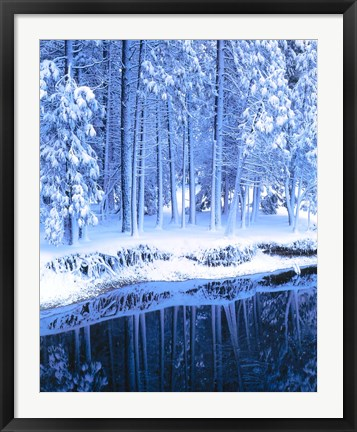 Framed Winter, Conifers, Merced River, Yosemite Valley CA Print