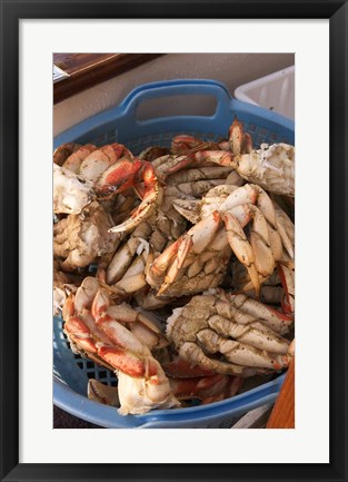Framed Dungeness Cooked Crab, Queen Charlotte Islands, Canada Print