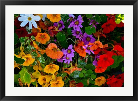 Framed British Columbia, Victoria, Flowerbox on House boats Print