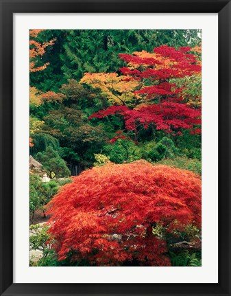 Framed View of Butchart Garden, Victoria, British Columbia, Canada Print