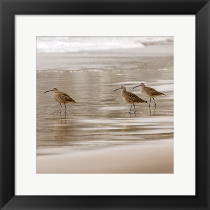 Framed Shore Birds I Print