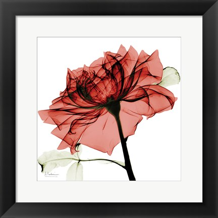 Framed Red Rose Print