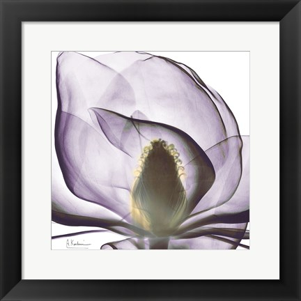 Framed Purple Magnolia Print