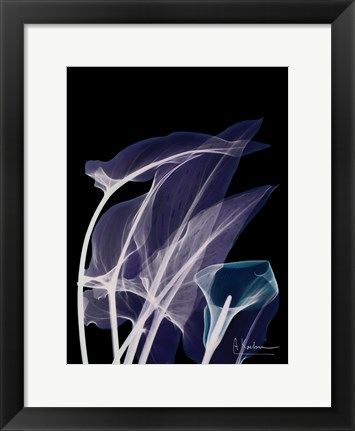 Framed Lily Xray Print