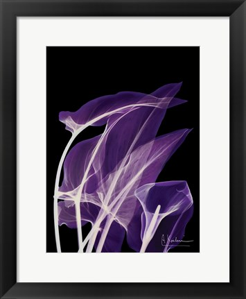 Framed Purple Calla Print