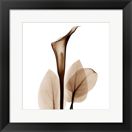 Framed Calla Lily in Sienna Print