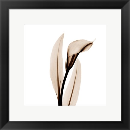 Framed Single Calla Lily in Sienna Print