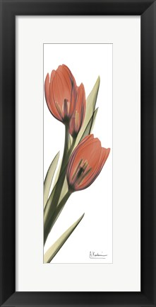 Framed Soft Tulip Print