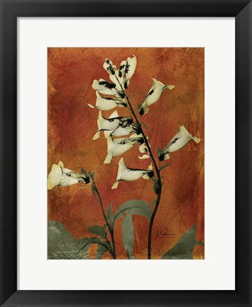 Framed Golden Foxglove 2 Print