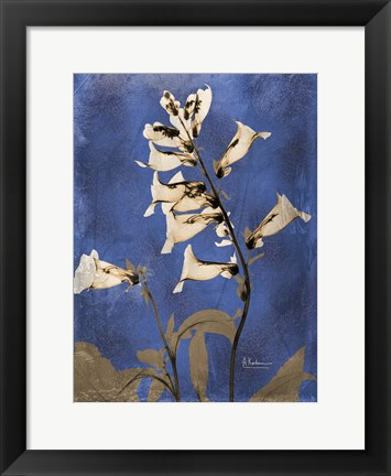 Framed Golden Foxglove 5 Print