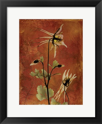 Framed Columbine Orange Print