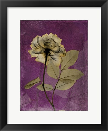Framed Rose 4 Print