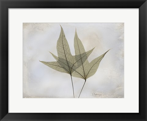 Framed Trident Maple Print