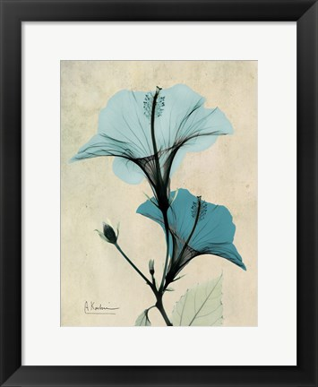 Framed Hibiscus 3 Print