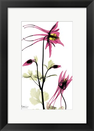 Framed Columbine Print