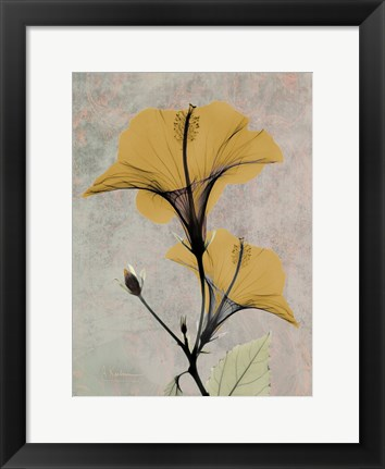 Framed Hibiscus 4 Print