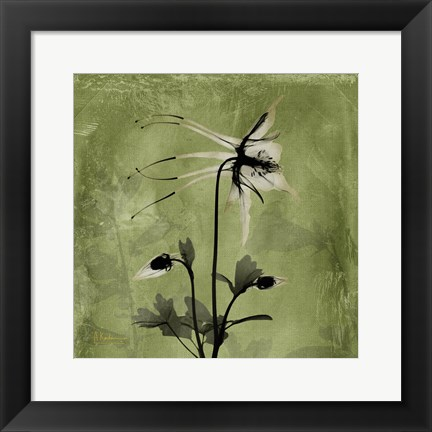Framed Columbine Green Print